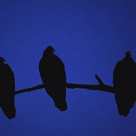 Joe  Connors - African Vultures in early nightfall.