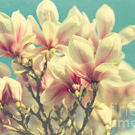 Sylvia Cook - After the winter- magnolia photograph