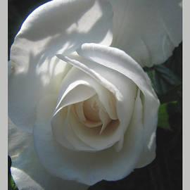 Brooks Garten Hauschild - Afternoon Delight Rose