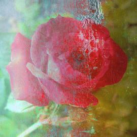 Brooks Garten Hauschild - Ageless