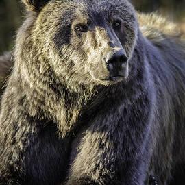 Thomas Payer - Alaska Grizzly Portrait
