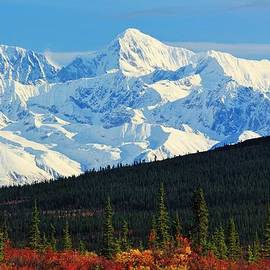David Broome - Alaska Range Boreal Autumn Vista