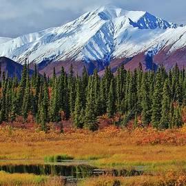 David Broome - Alaska Range Peat Bog Vista