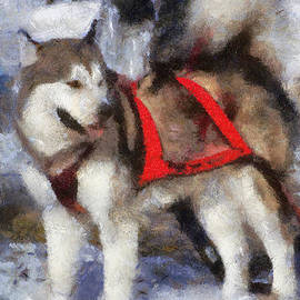 Thomas Woolworth - Alaskan Malamute Photo Art 02