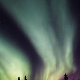 David Broome - Alaskan Night