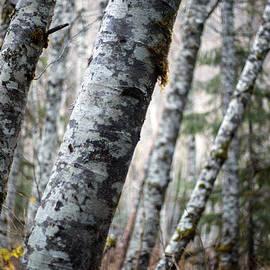 Mike Reid - Alder Forest Leaning