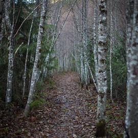 Mike Reid - Alder Path