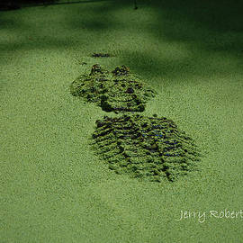 Jerry Robertson - AlgaeGator.....