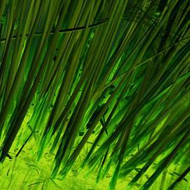 Jeremy Nicholas - Alien Grass