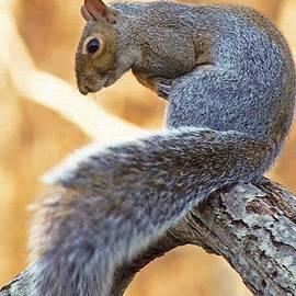 Bonita S Sylor  - All Squirrel