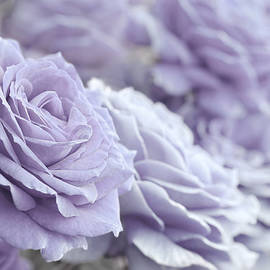 Jennie Marie Schell - All the Lavender Roses