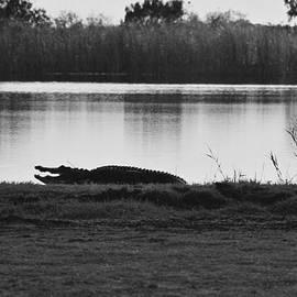 Chuck  Hicks - Alligator Landscape