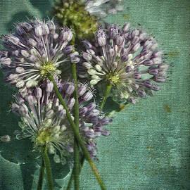 Kathy Clark - Allium Wildflower With Grunge Textures