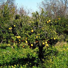 Colette V Hera  Guggenheim  - Almanzora Mountain Lemons Winther Spain