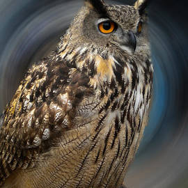 Colette V Hera  Guggenheim  - Almeria Wise Owl living in Spain