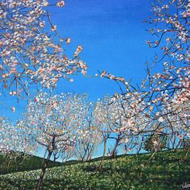 Valentina Henao - Almond Trees