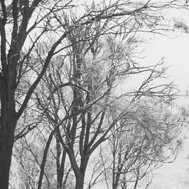 Vishva Vajra - Almost bare