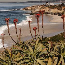 Lee Kirchhevel - Aloes at La Jolla Cove 2