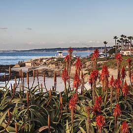Lee Kirchhevel - Aloes at La Jolla Cove