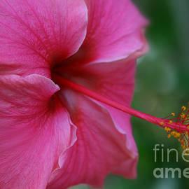 Sharon Mau - Aloha Aloalo Ulu Wehi Pink Tropical Hibiscus Wilipohaku Hawaii