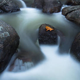 Dustin  LeFevre - Alone in Autumn Splendor