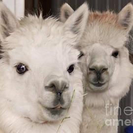 Janice Rae Pariza - Alpaca Friends