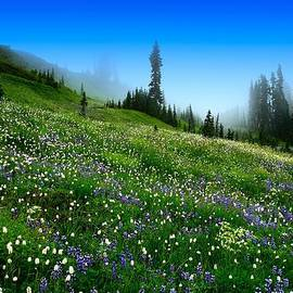 Lynn Hopwood - Alpine Meadow