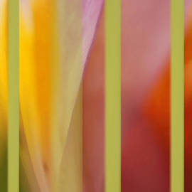 Lyn  Perry - Alstromeria and Tulips