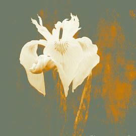 Beverly Guilliams - AMAZING  Iris Grace