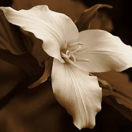 Jennie Marie Schell - Amber Trillium Wild Flower