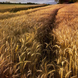 Debra and Dave Vanderlaan - Amber Waves of Grain