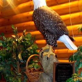 Pamela Hyde Wilson - American Bald Eagle