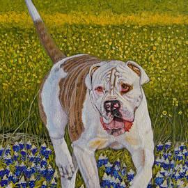 Manuel Lopez - American Bulldog original oil painting 10x8in