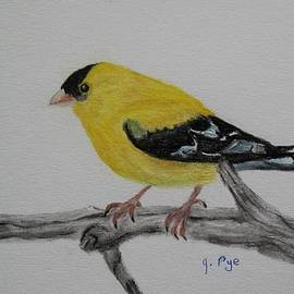 Joan Pye - American Goldfinch