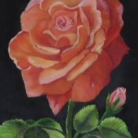Janis  Tafoya - American Rose