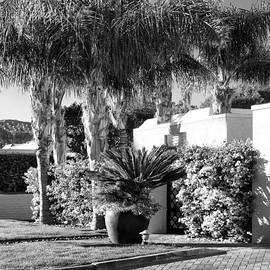 William Dey - AMIR DRIVE BW Marrakesh Palm Springs