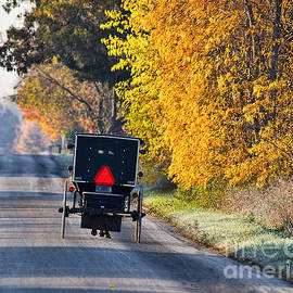 David Arment - Amish Buggy and Yellow Leaves
