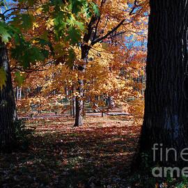 Glenn Morimoto - Among the Autumn Trees