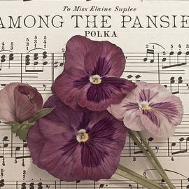 Sandra Foster - Among The Pansies
