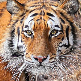 Diane Alexander - Amur Tiger Portrait