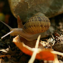 Jeff  Swan - An awesomely slow snail