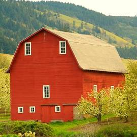 Jeff  Swan - An Old Barn In Odell Oregon Blossoms