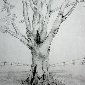 Stacy C Bottoms - An Old Tree