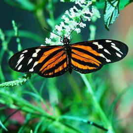 Jeff  Swan - An Orange And Black Butterfly