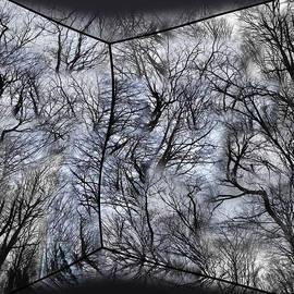 Florin Birjoveanu - Analog Wood