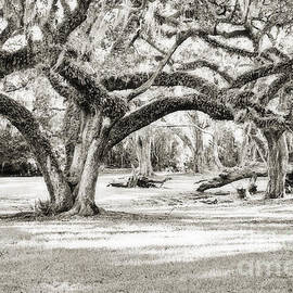 Scott Pellegrin - Ancient Oaks