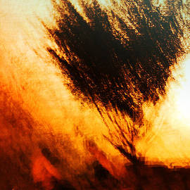 Music of the Heart - The Bush Burned .. And The Bush Was Not Consumed