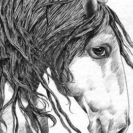 Kate Black - Andalusian Horse