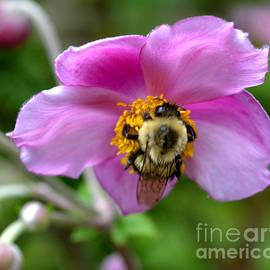 Eva Thomas - Anemones and a Bee