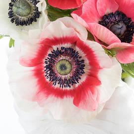 Ann Garrett - Anemones in a White Shell Vase